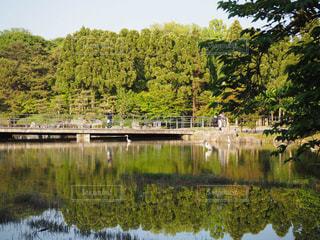 木々 に囲まれた水の体の上の橋の写真・画像素材[1212551]