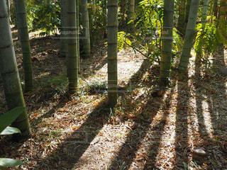 森の中の緑の植物の写真・画像素材[1214730]