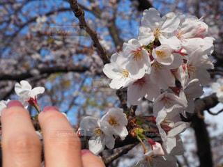 花の写真・画像素材[2005066]