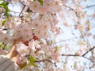 花の写真・画像素材[2017908]