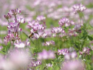 植物の上の紫色の花の写真・画像素材[2099060]