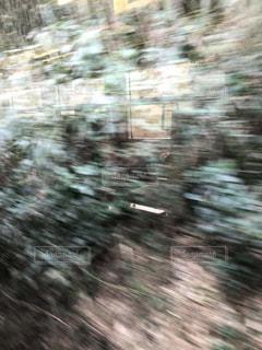 森のぼやけた写真の写真・画像素材[1065477]