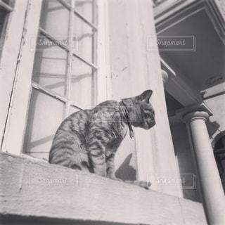 窓辺に座る猫の写真・画像素材[1045955]