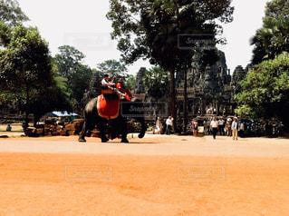 象に乗っている人の写真・画像素材[1051313]