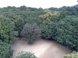 笠山椿群生林の写真・画像素材[1054363]
