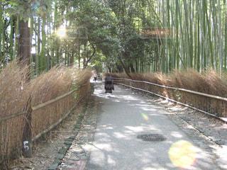 竹林の写真・画像素材[1060110]