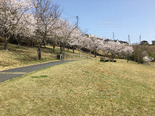 桜並木の写真・画像素材[1093751]