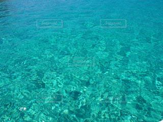 海の水中の景色の写真・画像素材[1109228]