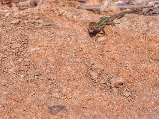 爬虫類の写真・画像素材[1118784]
