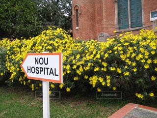 サインの前に黄色の花の写真・画像素材[1278332]