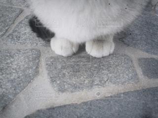 ネコの足の写真・画像素材[1342408]