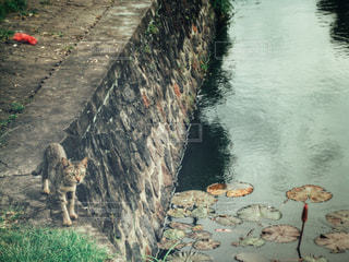 川を歩いて人々 のグループの写真・画像素材[1342409]
