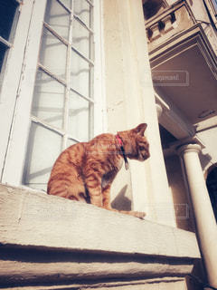 窓辺に座るネコの写真・画像素材[1342410]