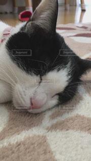 近くに白い表面で横になっている猫のアップの写真・画像素材[1045636]