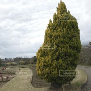 庭の植物の写真・画像素材[1046495]
