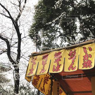 木の側面にある記号の写真・画像素材[1080522]