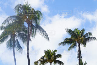 Hawaiiの写真・画像素材[1046062]