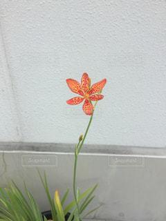 希少植物の写真・画像素材[1046244]