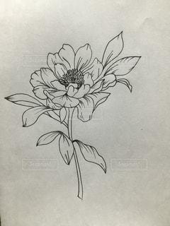 花のボールペンイラストの写真・画像素材[1046247]