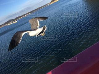 海へ行くの写真・画像素材[1224322]