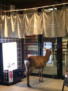 店の前に立っている鹿の写真・画像素材[1050565]