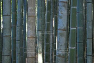 竹林たちの集合写真の写真・画像素材[1050639]