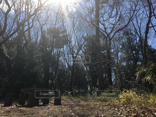 森の中のベンチの写真・画像素材[1047987]