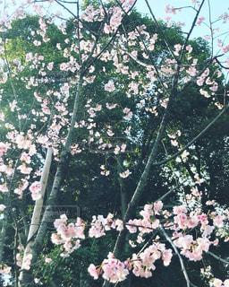春の訪れの写真・画像素材[1048238]