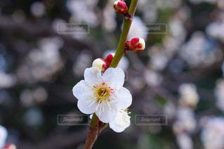 近くの花のアップの写真・画像素材[1048464]