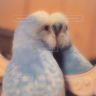 鏡大好きっ♡の写真・画像素材[1049077]