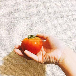 トマトを持っている人の写真・画像素材[1239599]