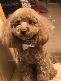 飼い主をみる私の犬 - No.1048600