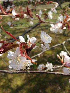 春の写真・画像素材[1124994]