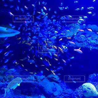 水中の魚の群れ - No.1062637