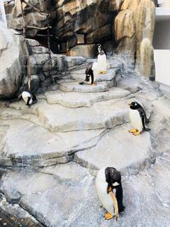 ペンギンダンジョンの写真・画像素材[1049058]