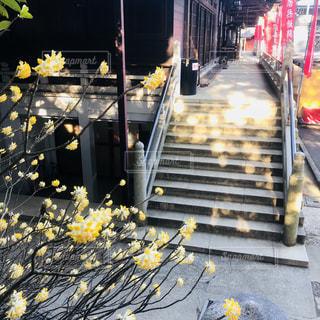 高尾山薬王院と小さな春の写真・画像素材[1062297]