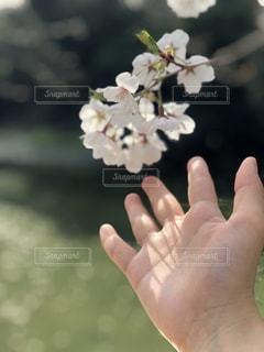花を持っている手 - No.1098427