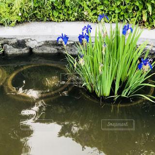 近くの水の池の写真・画像素材[1175658]