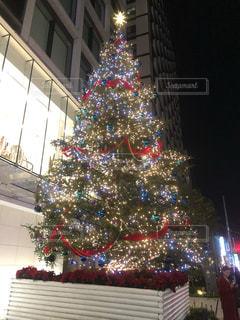 南青山のクリスマスツリーの写真・画像素材[1597999]