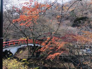 伊香保温泉の河鹿橋の写真・画像素材[1639387]