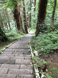 羽黒山参道の写真・画像素材[2327056]