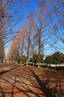森の大きな木の写真・画像素材[1049154]