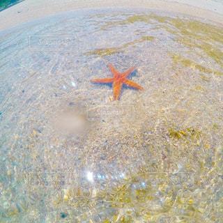 海の中のヒトデの写真・画像素材[1049658]