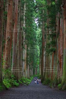 フォレスト内のツリーの写真・画像素材[1049808]