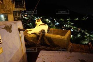 世界はネコのものの写真・画像素材[1051216]