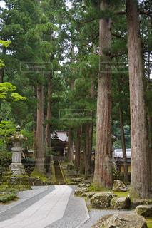 寺院と木の写真・画像素材[1057233]