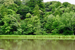 新緑の季節の写真・画像素材[1057266]