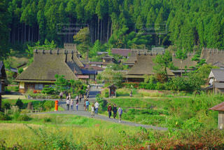 新緑と茅葺屋根の写真・画像素材[1057269]