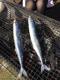 魚 - No.1049340