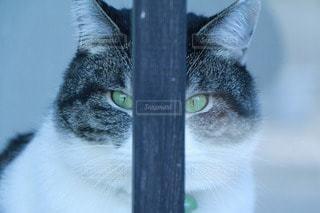 猫の写真・画像素材[42232]